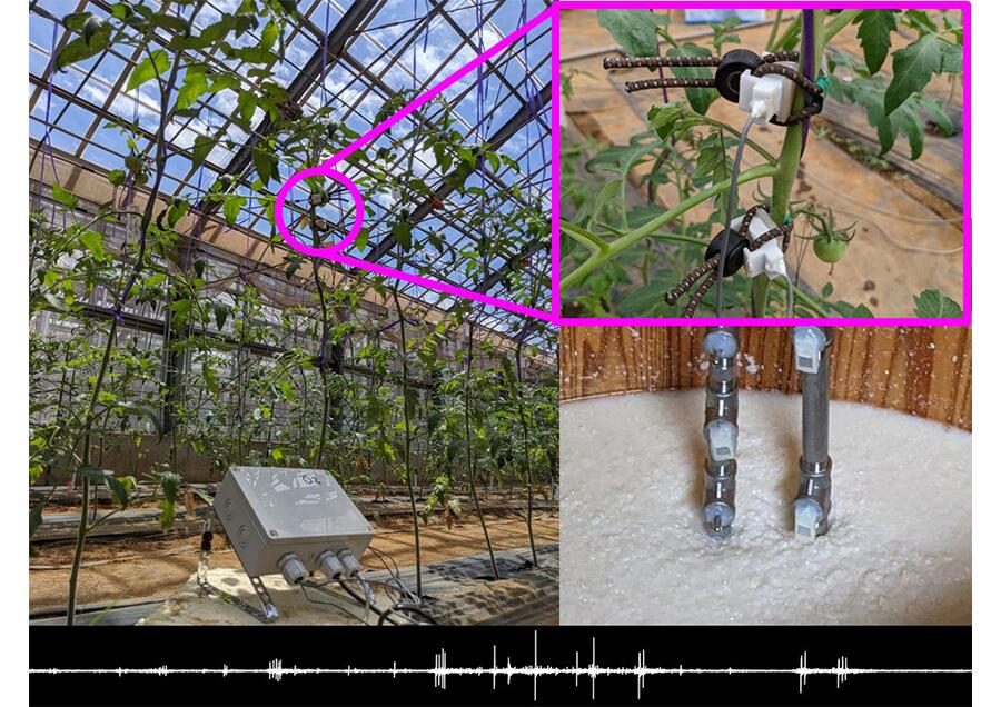 超音波AEセンシングによる植物等の活動モニタリング