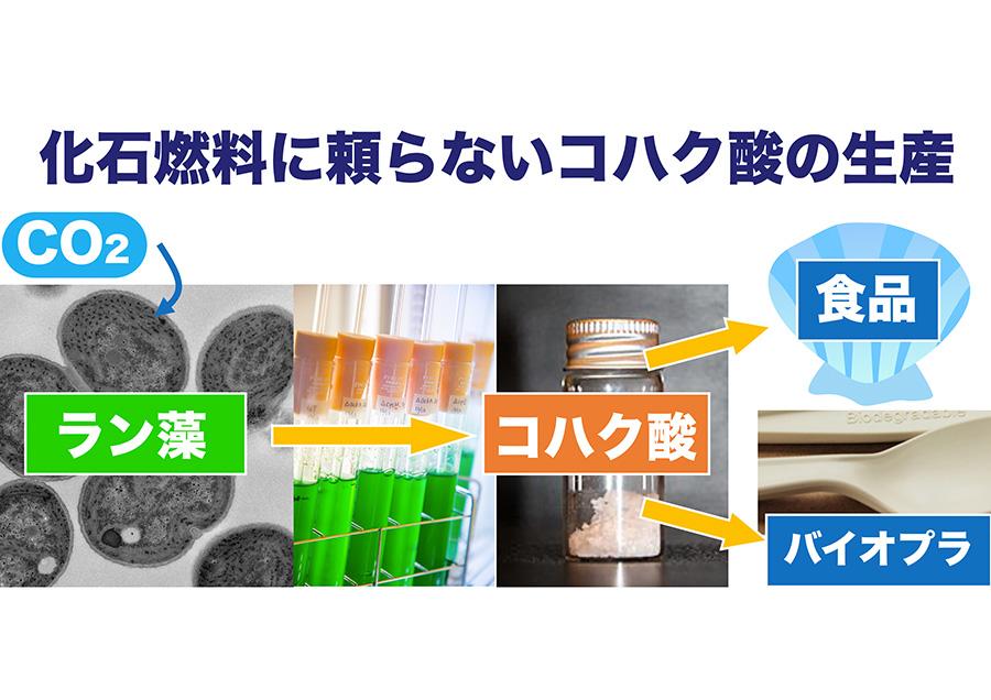 ラン藻による脱化石燃料技術開発