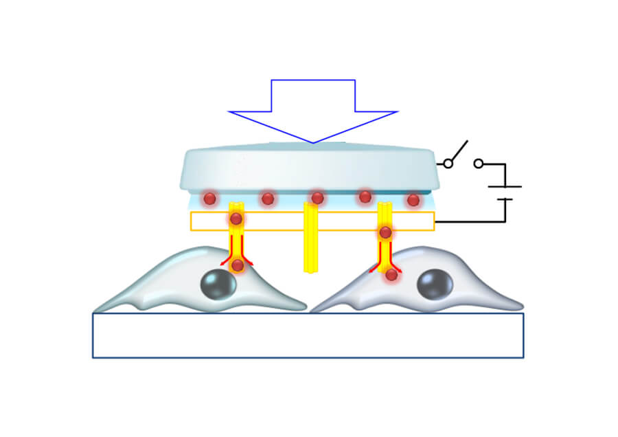 高効率な細胞内物質導入・抽出用ナノ構造体システム