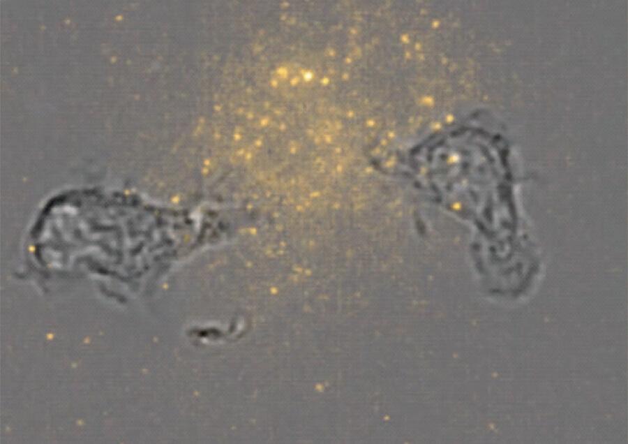 個人差・個体差を知るための細胞応答観察技術